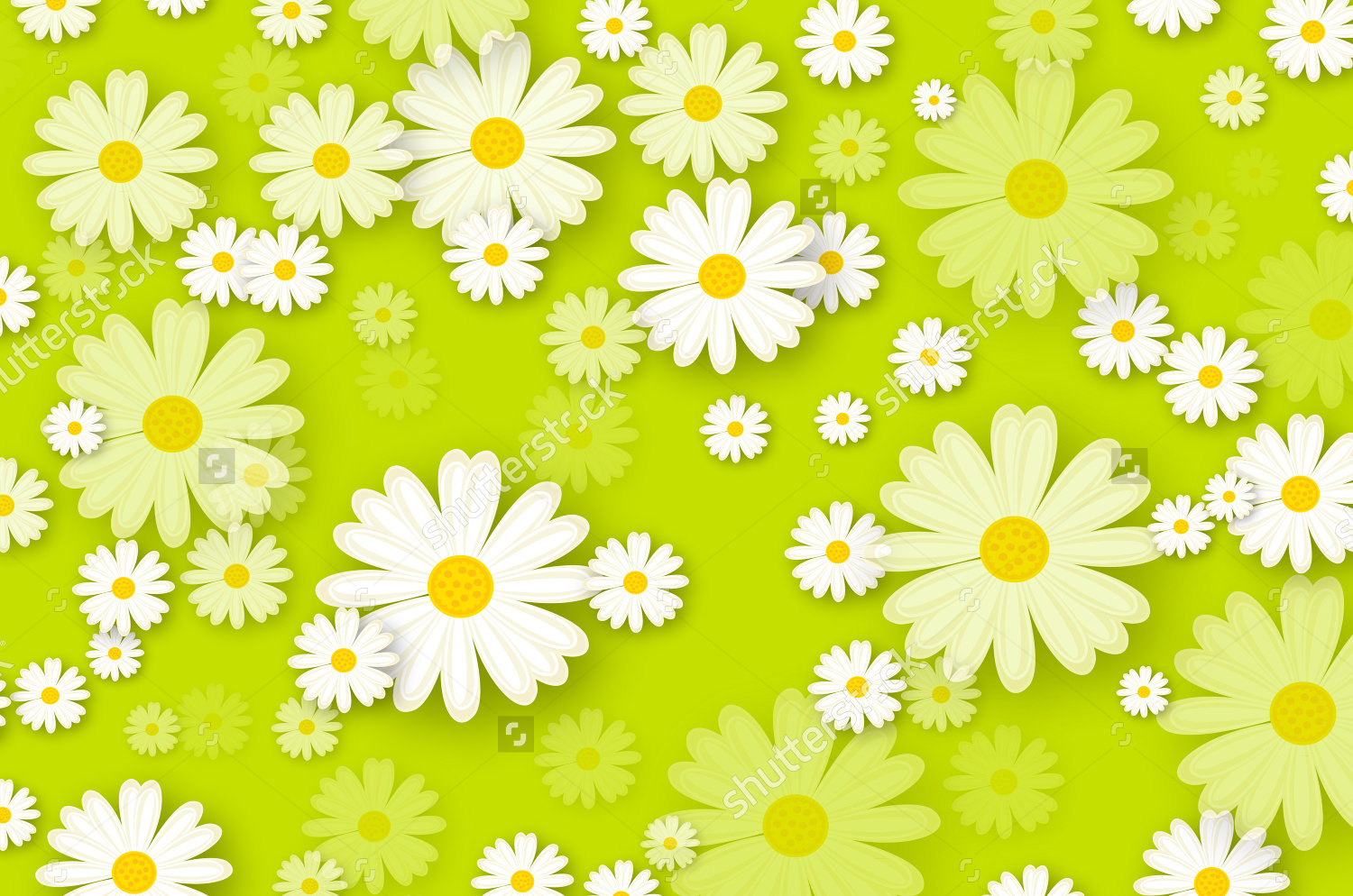 27 daisy backgrounds wallpapers images pictures