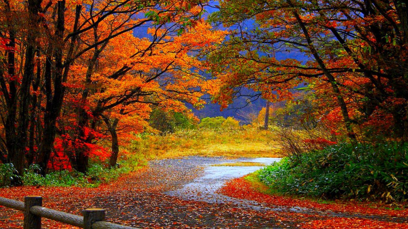 winding autumn road wallpaper