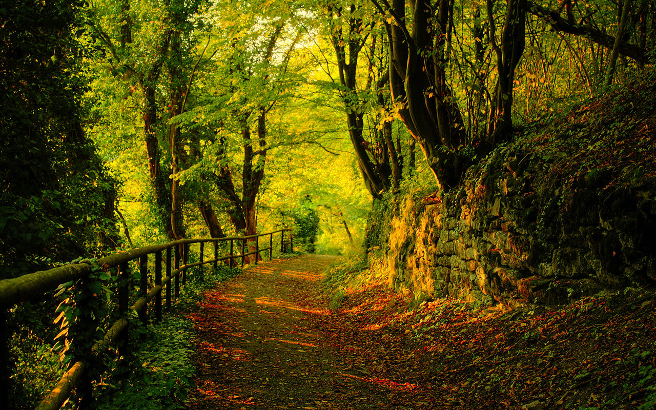 green autumn wallpaper