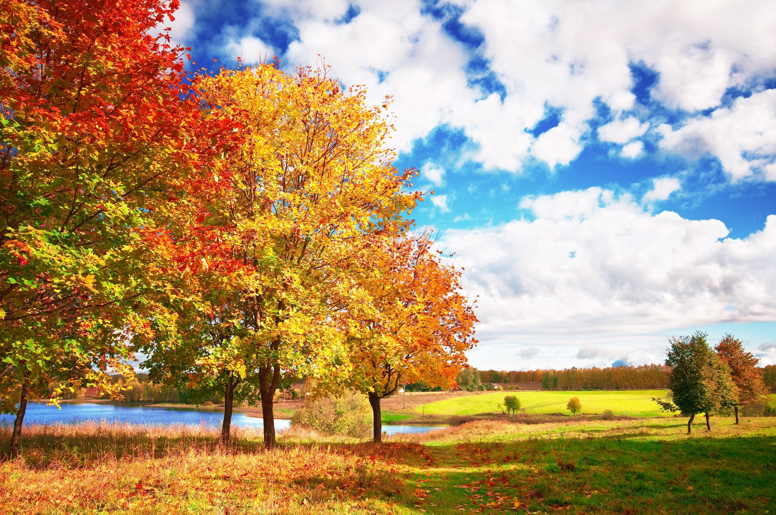 bright leaf autumn hd wallpaper