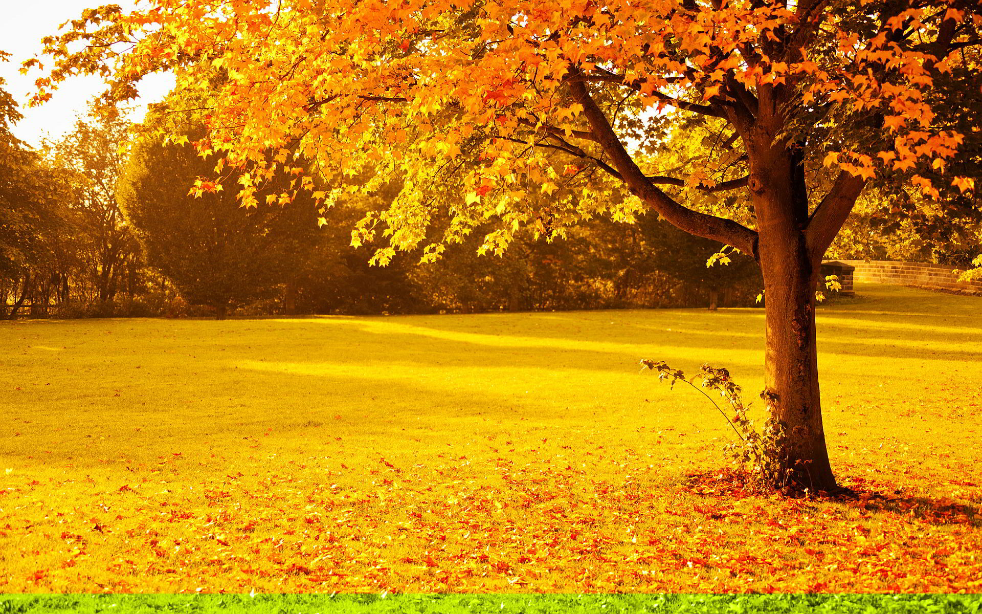 yellow red autumn park wallpaper