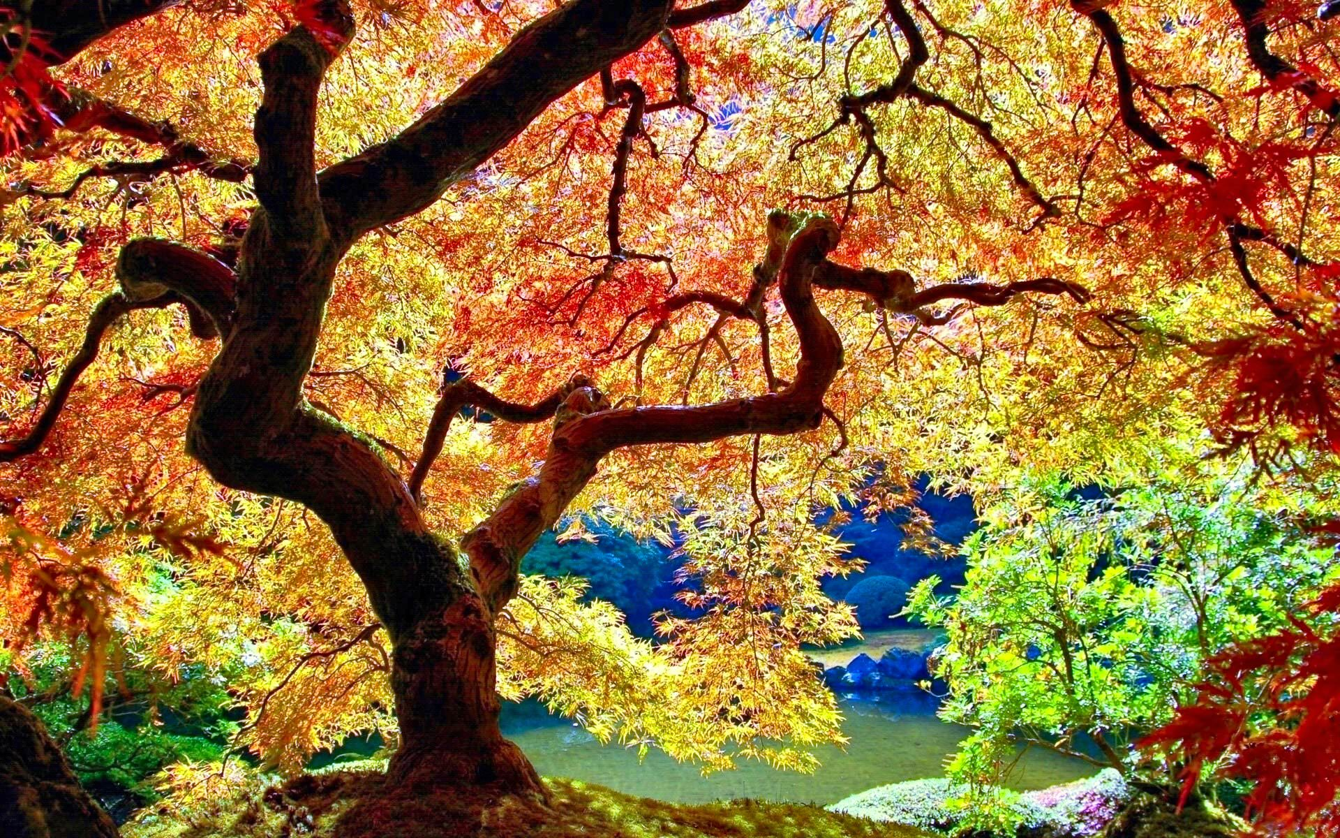 stunning autumn tree wallpaper
