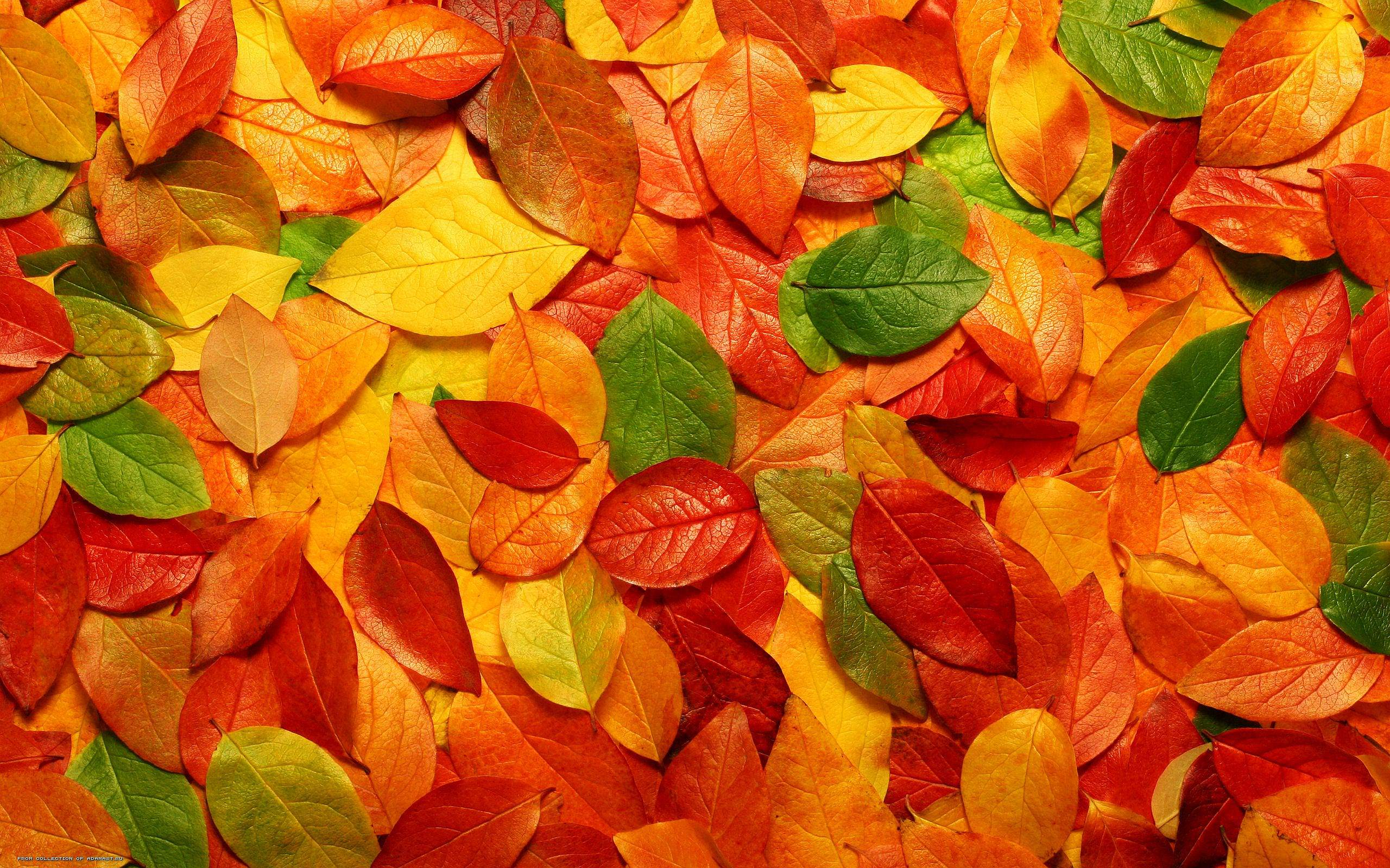 fabulous autumn leaves background