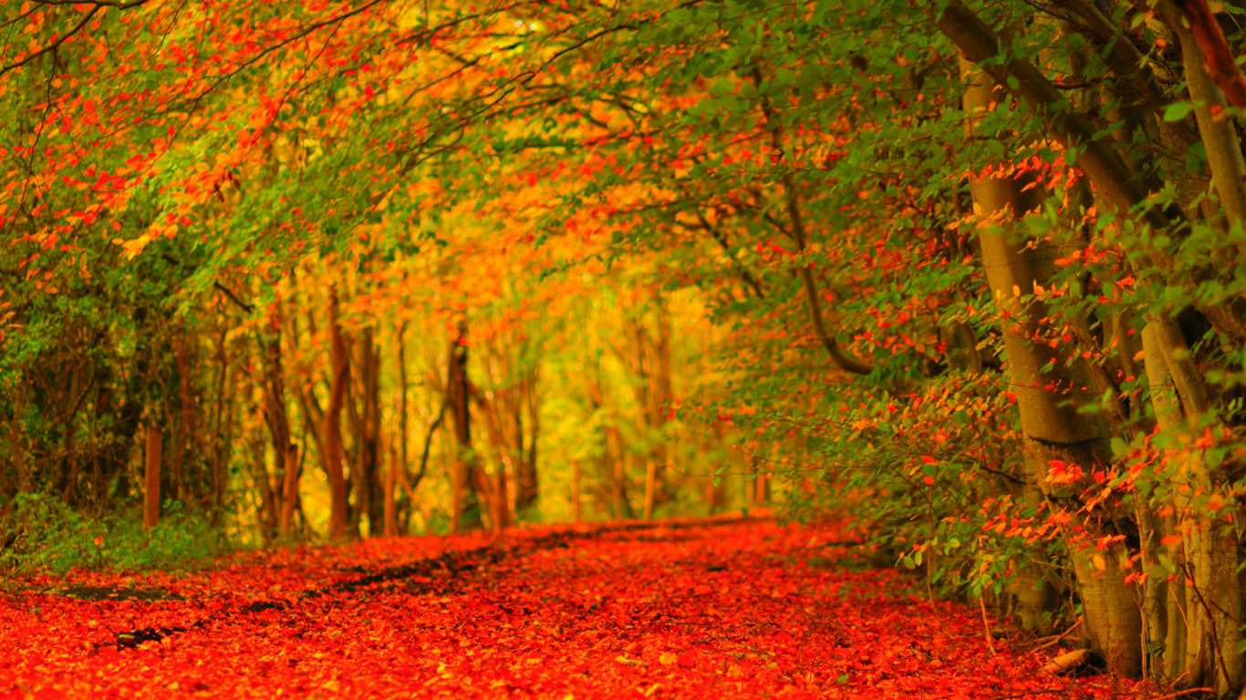 25 Autumn Wallpapers Backgrounds Images Pictures