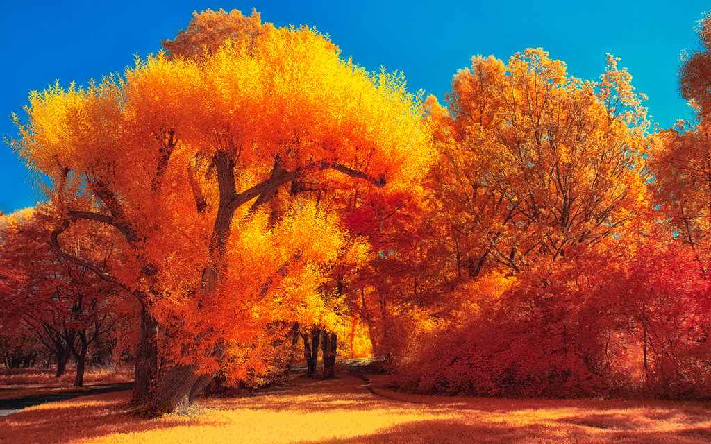 colours autumn wallpaper