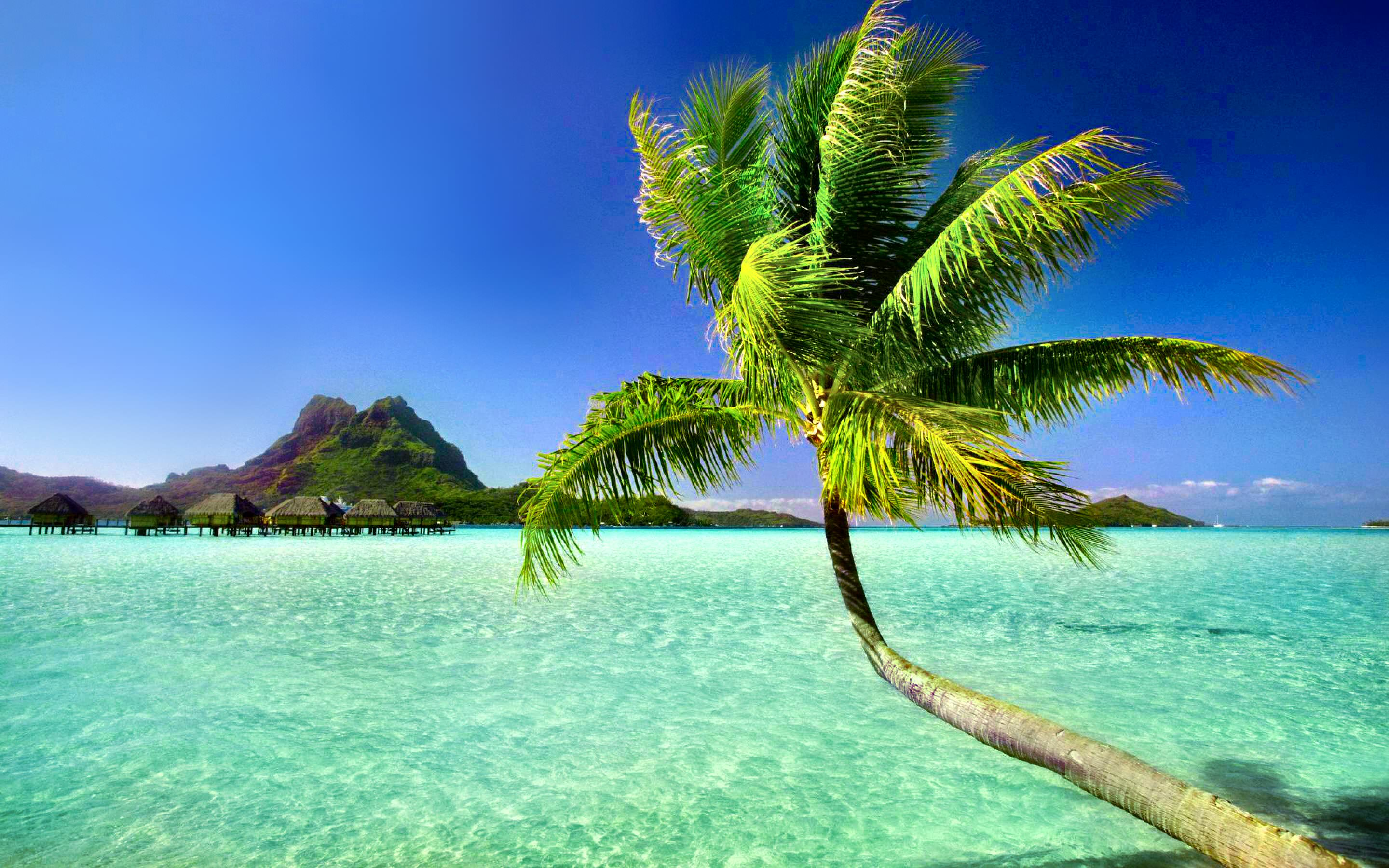 palm tree with blue pacific water sea background