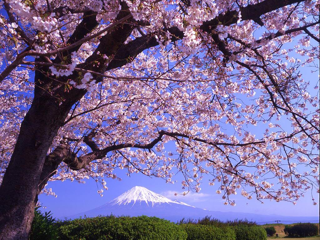Beautiful White Tree Background