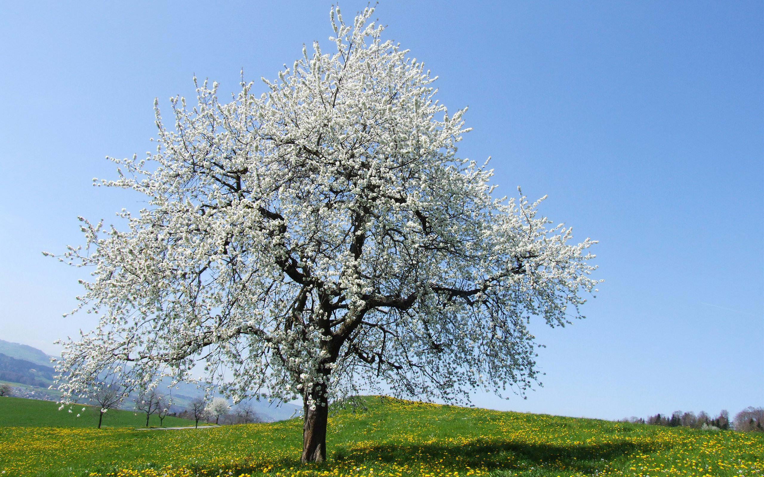 Beautiful Tree Background