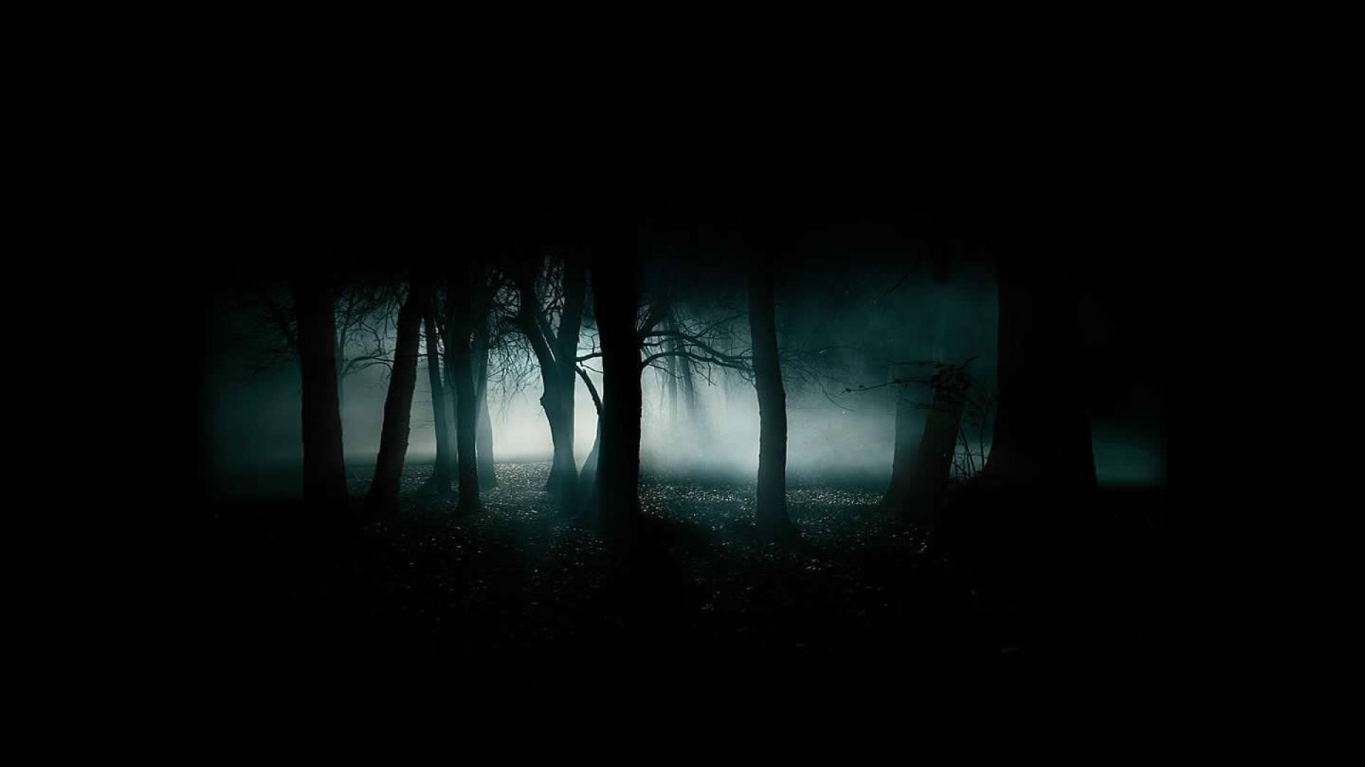 scary woods desktop background