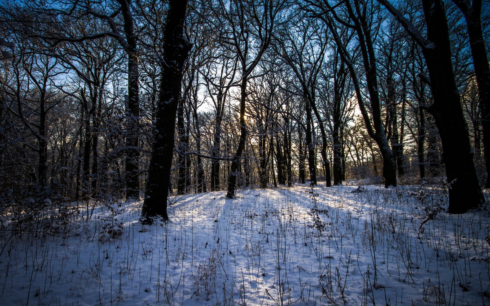 winter woods wallpaper