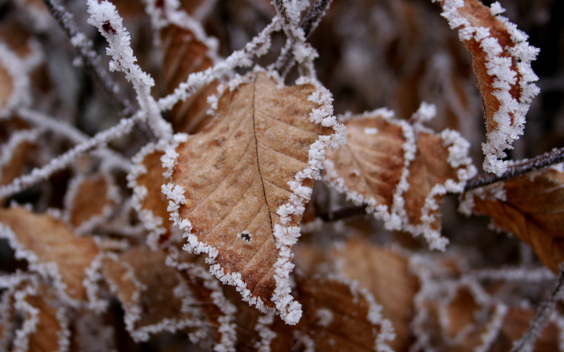 winter leaves wallpaper