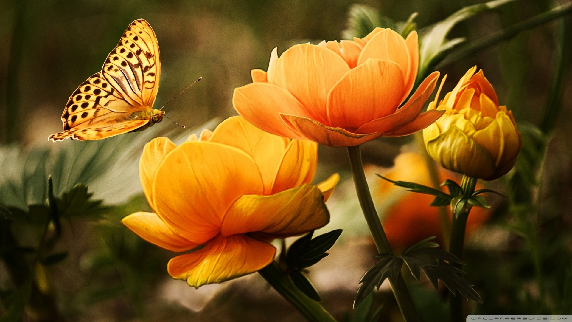 flowers and butterfly wallpaper