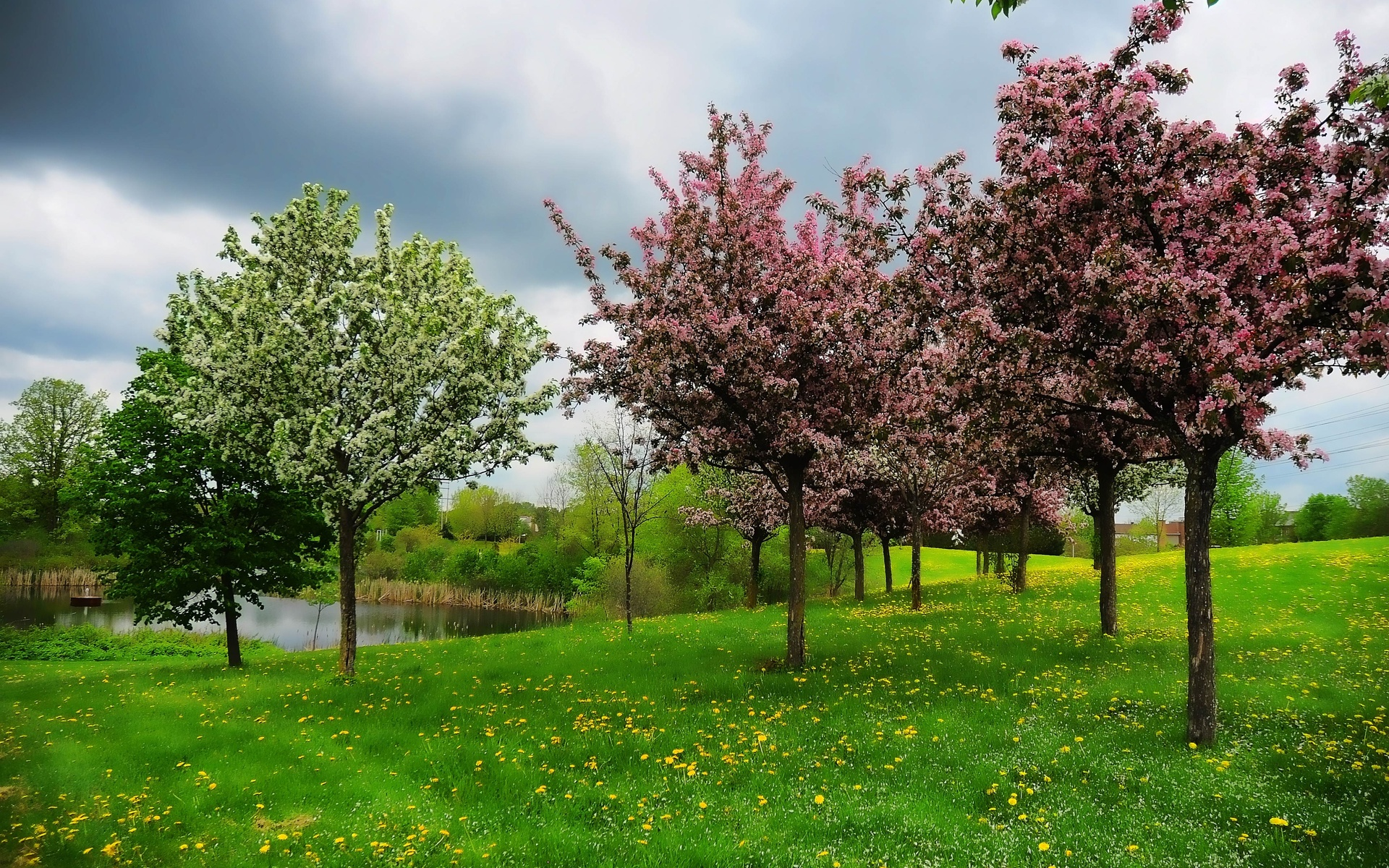 amazing spring tree wallpaper