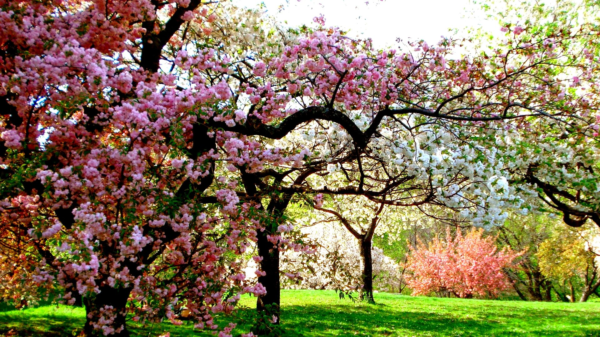 31 hd spring wallpapers backgrounds images design for Arboles frondosos para jardin