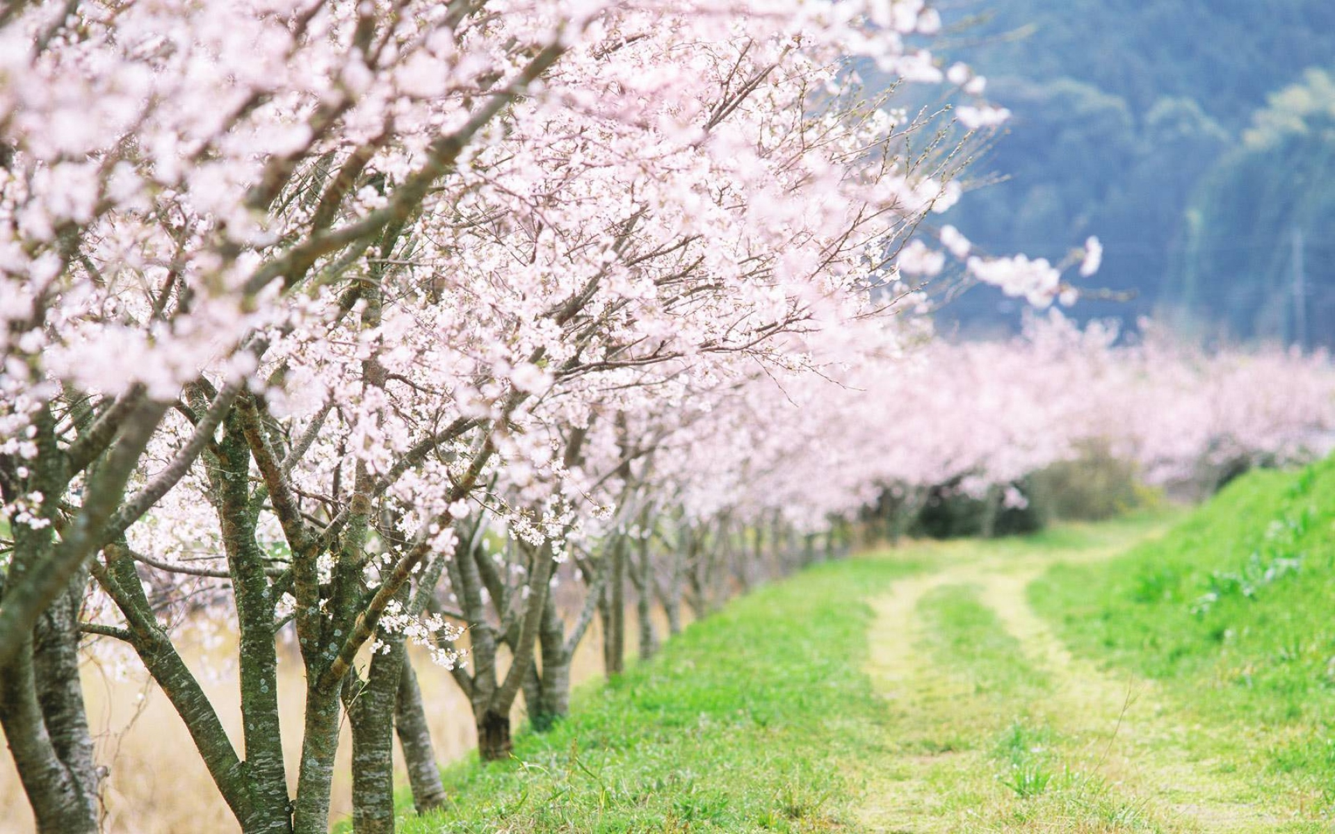 Spring Flowering Wallpaper