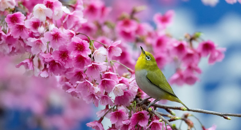 31 Beautiful Spring Wallpapers For Desktop