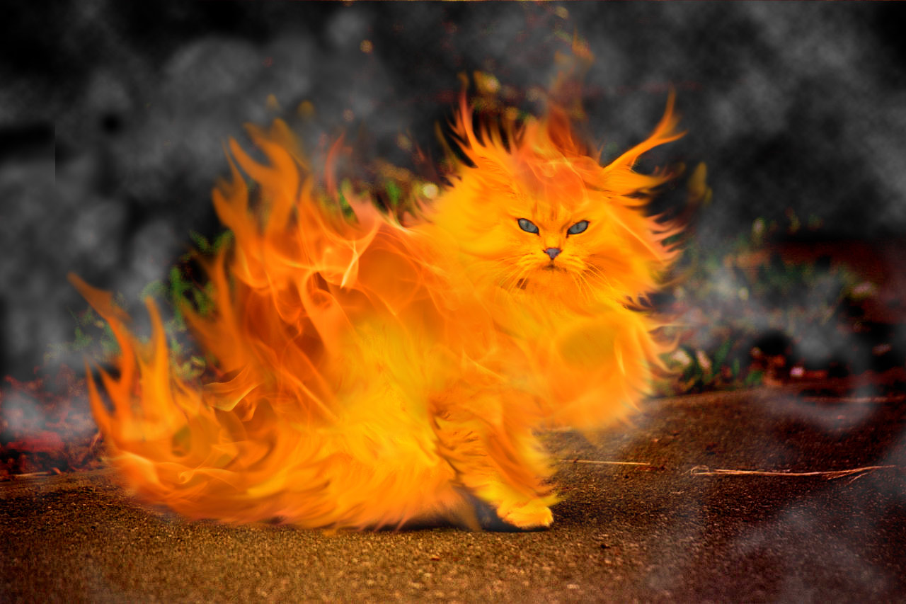 Artistic Elemental Cat Fire HD Wallpaper