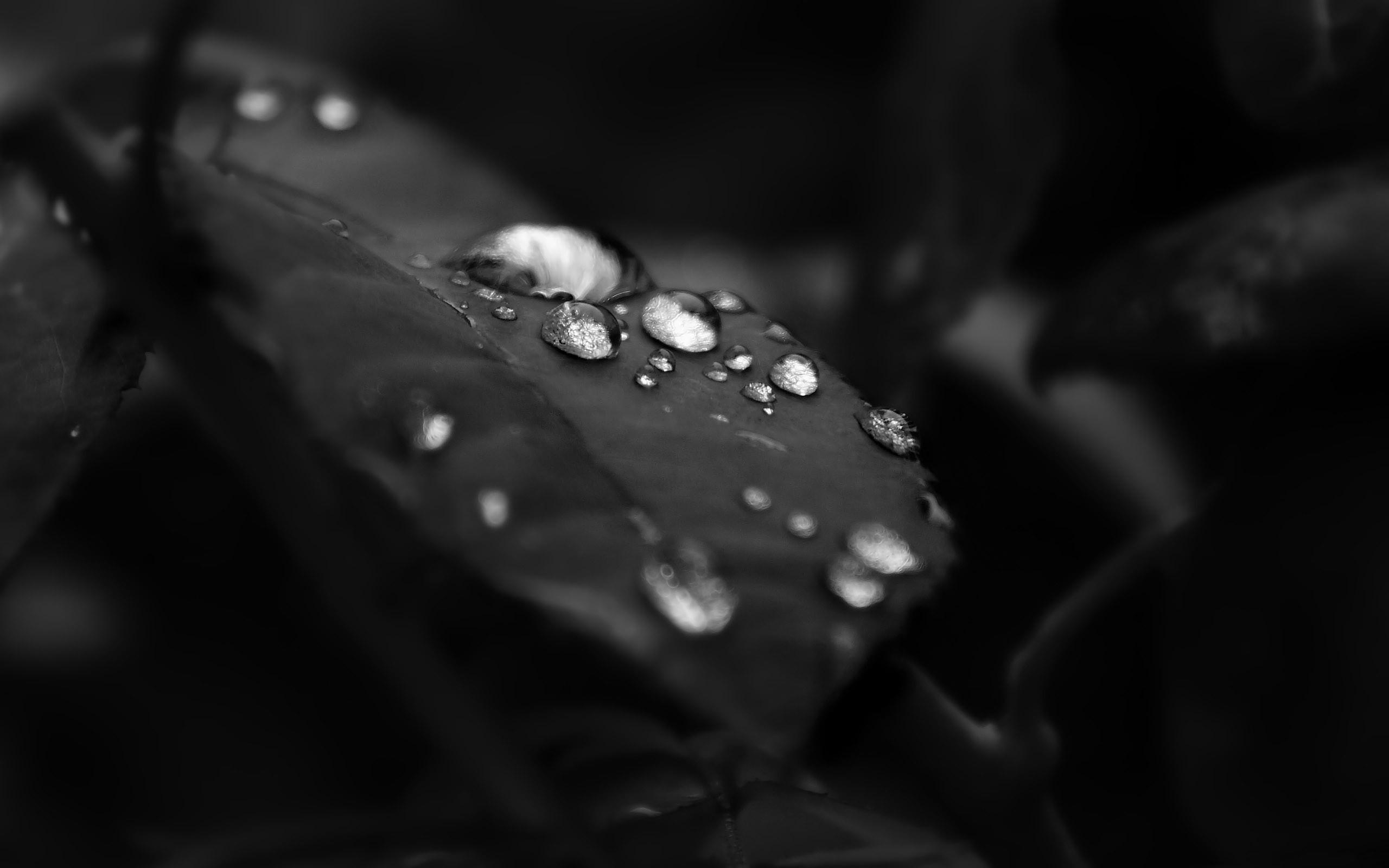 beautiful water droplet wllpaper