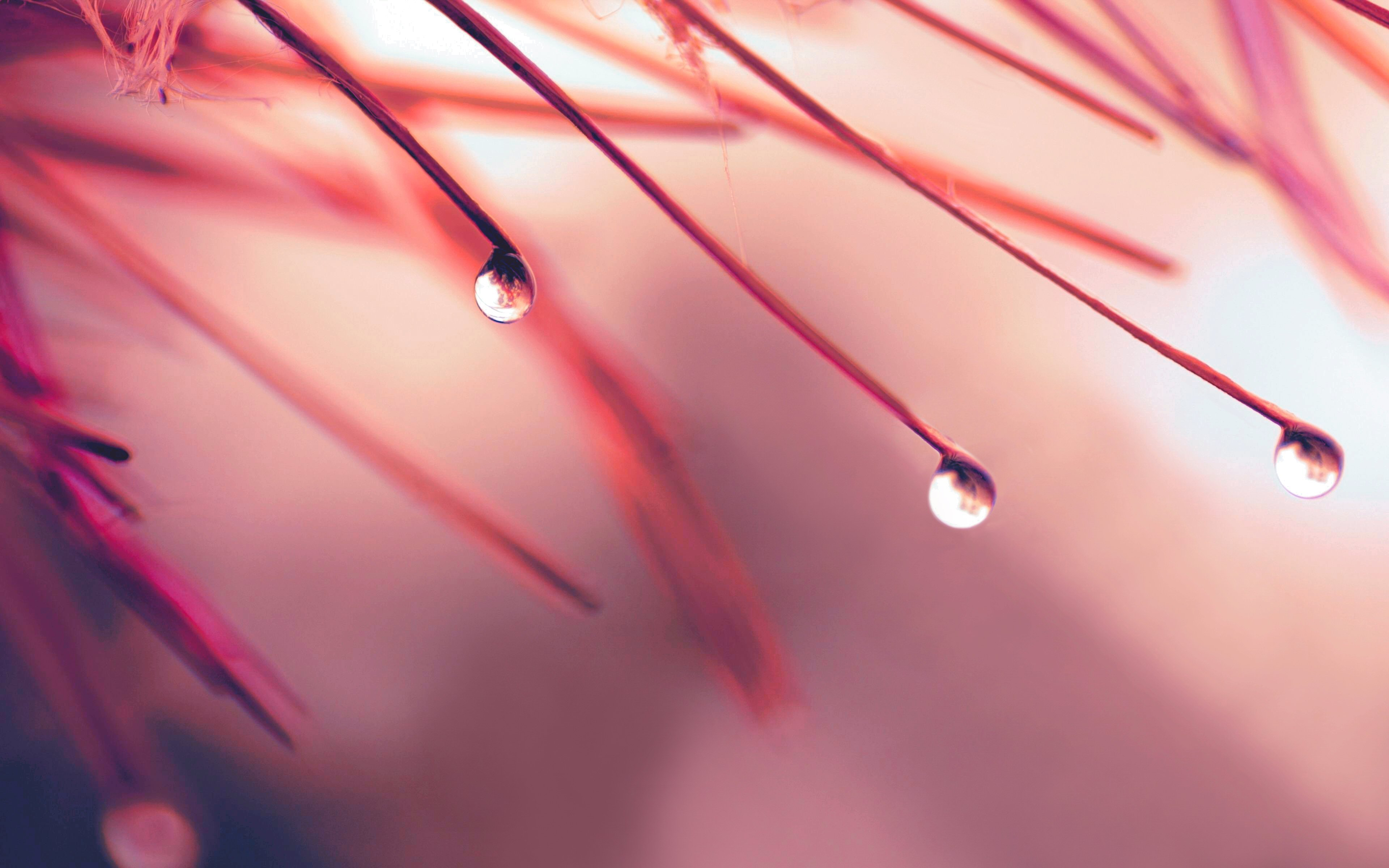 HD Water Drop Wallpaper