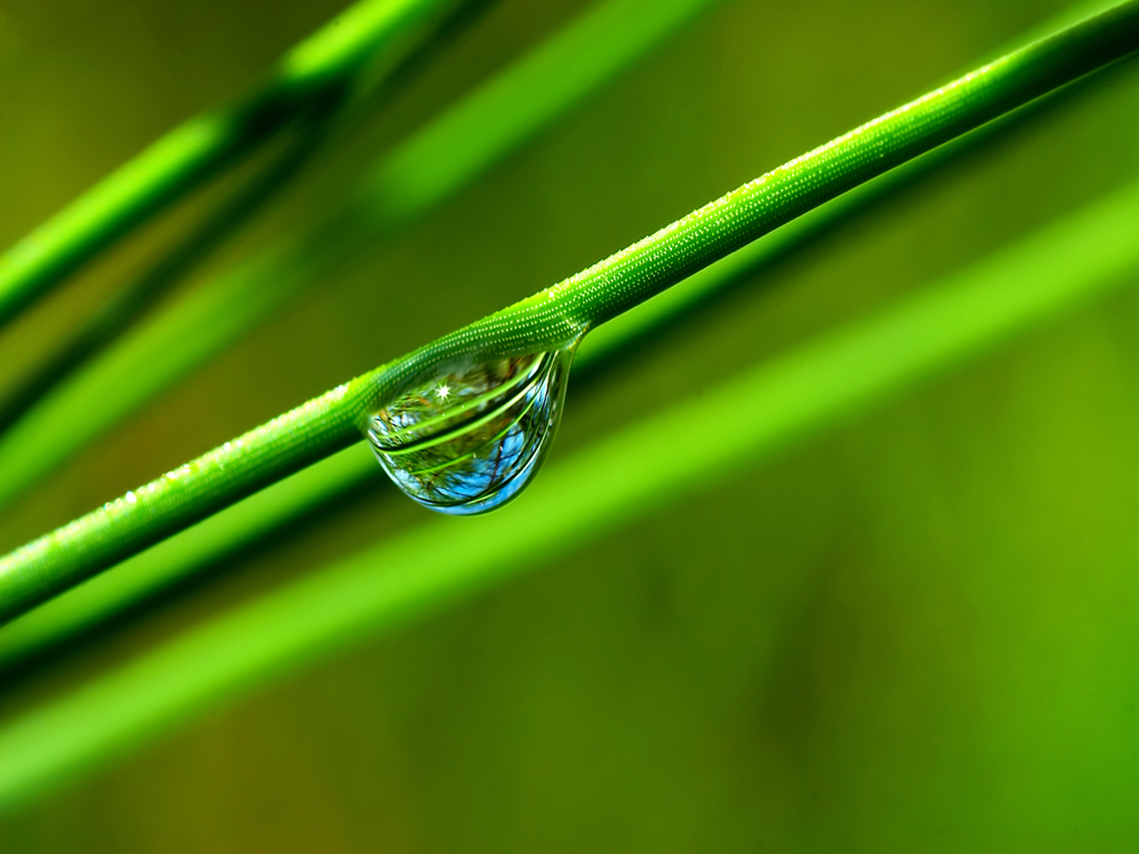Nature Waterdrop Wallpaper