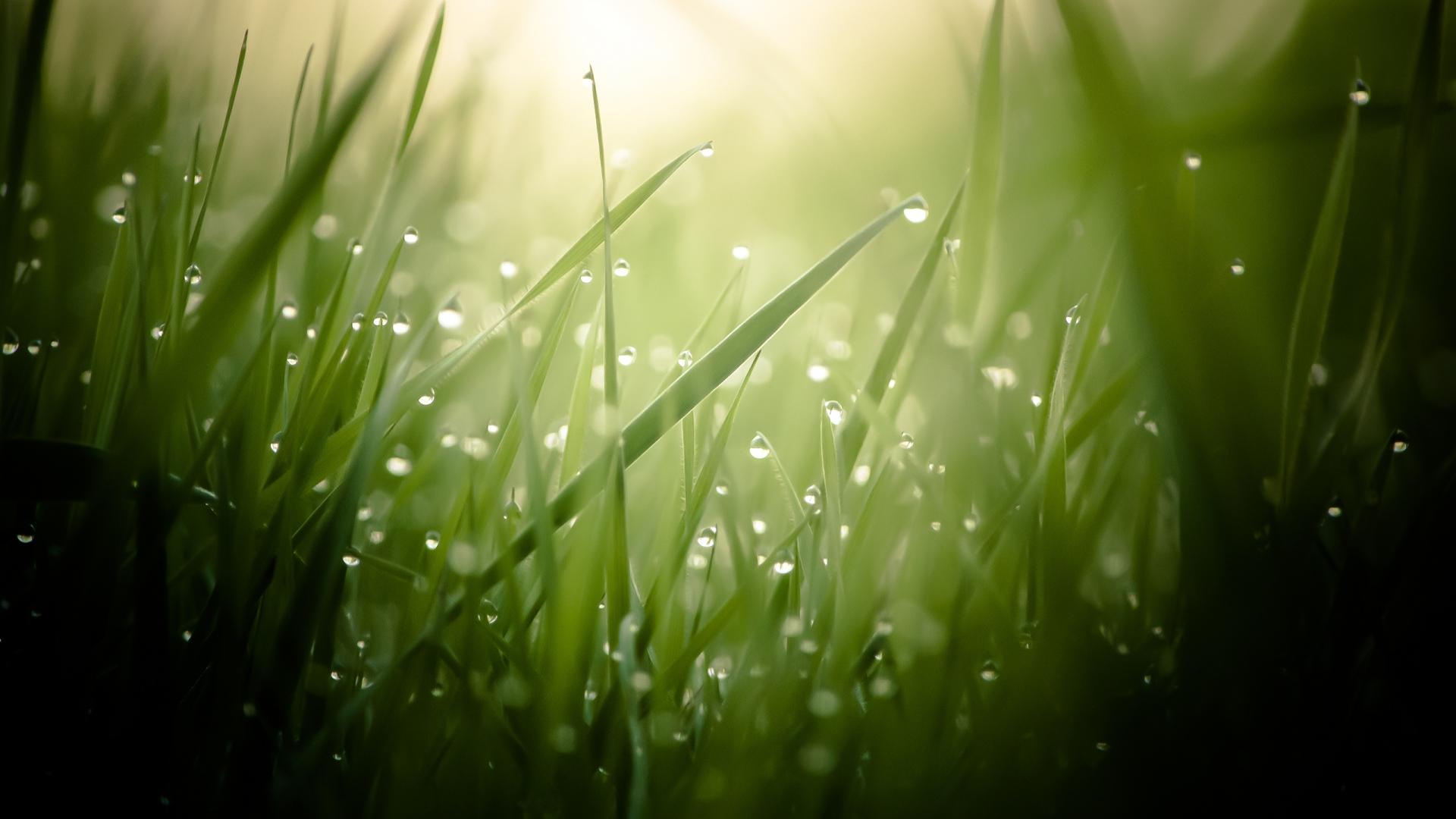 water drops on grass wallpaper