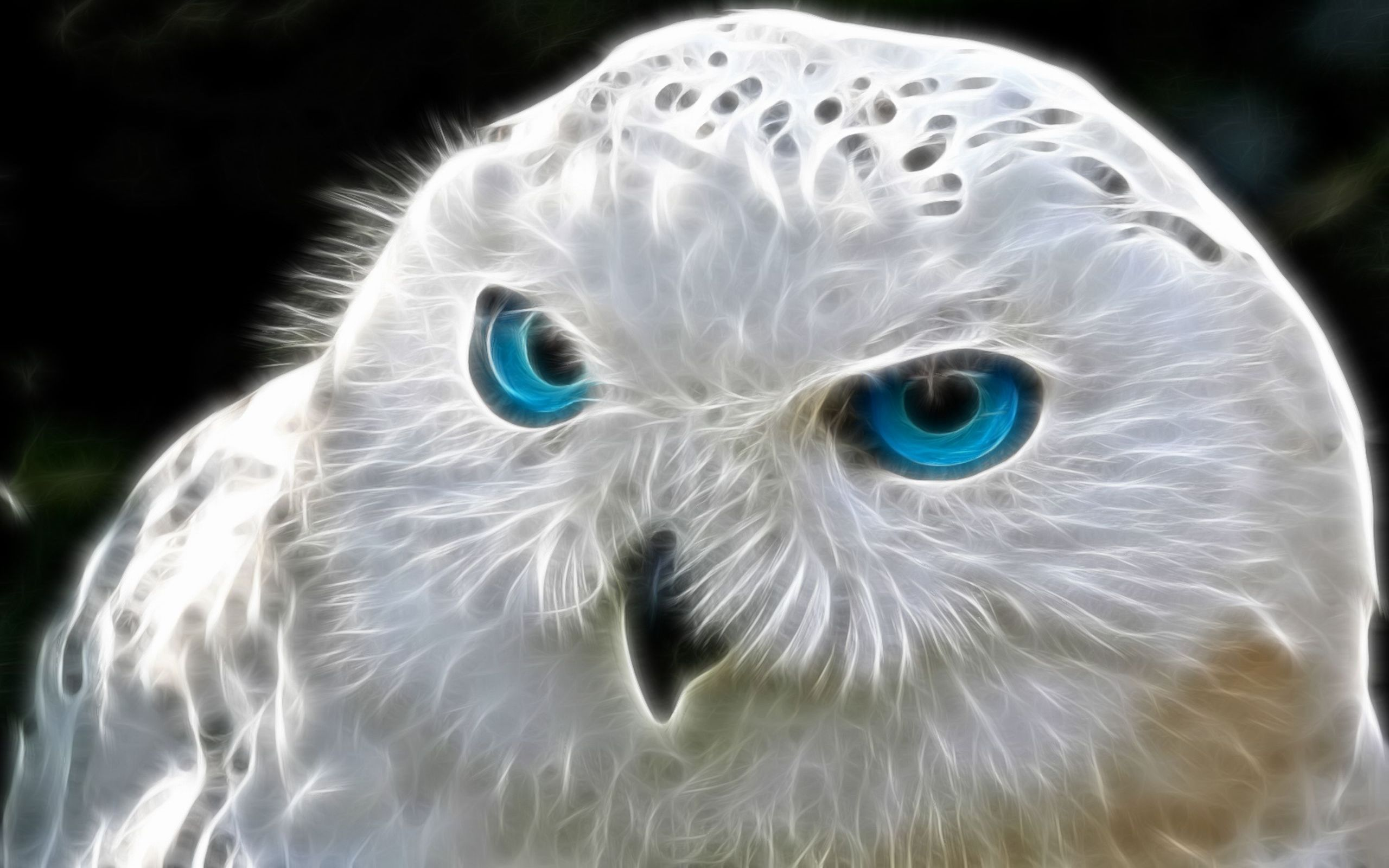 Beautiful Owl HD Wallpapers