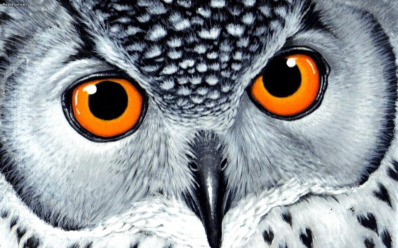 Owl Closeup Background Images