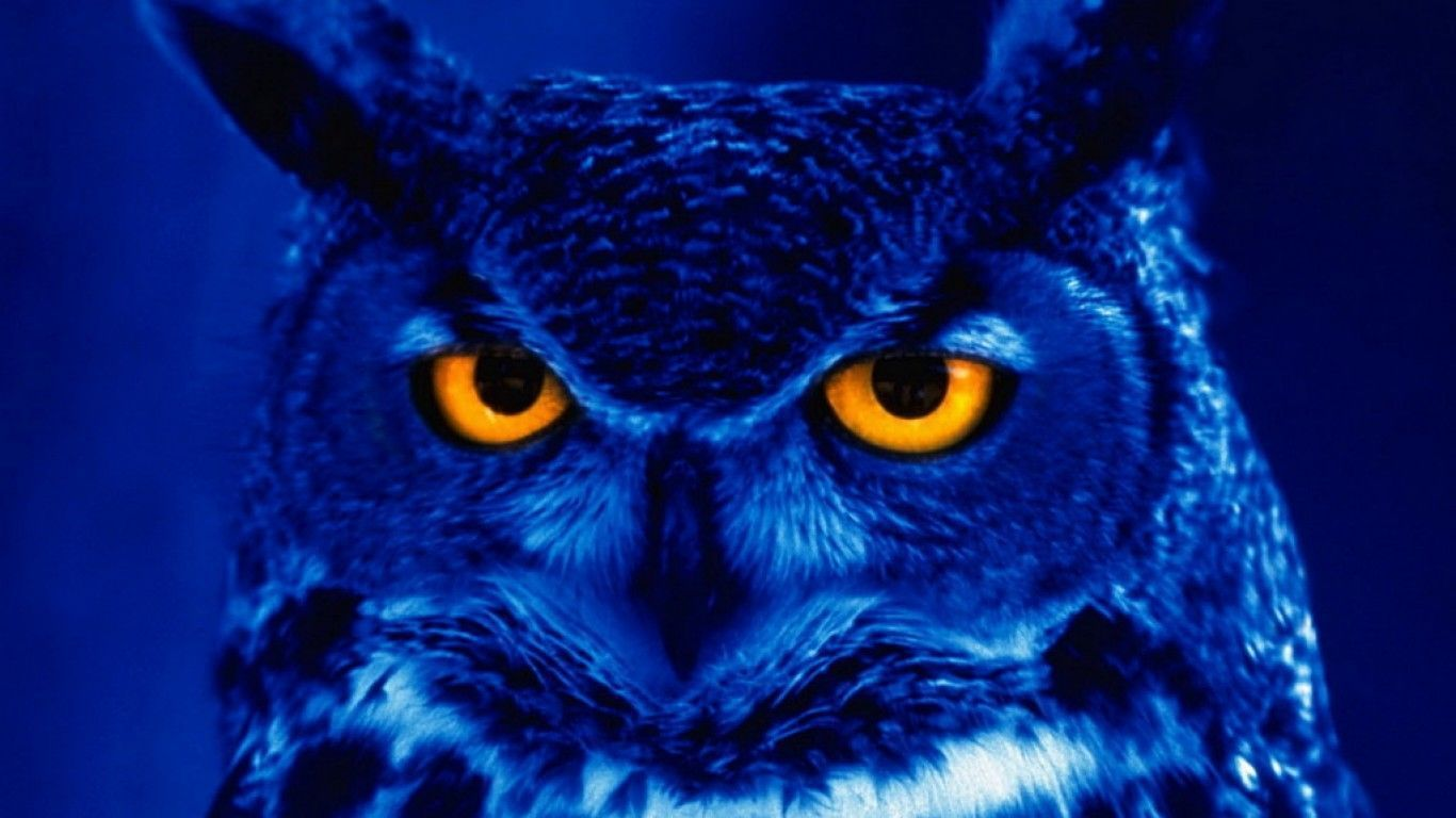 Blue Backgrounds Owl Wallpapers