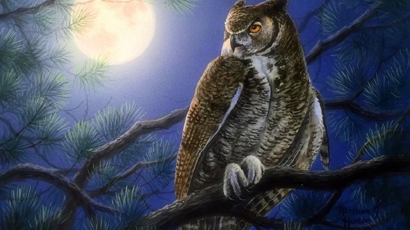 Moon Light Owl Wallpapers