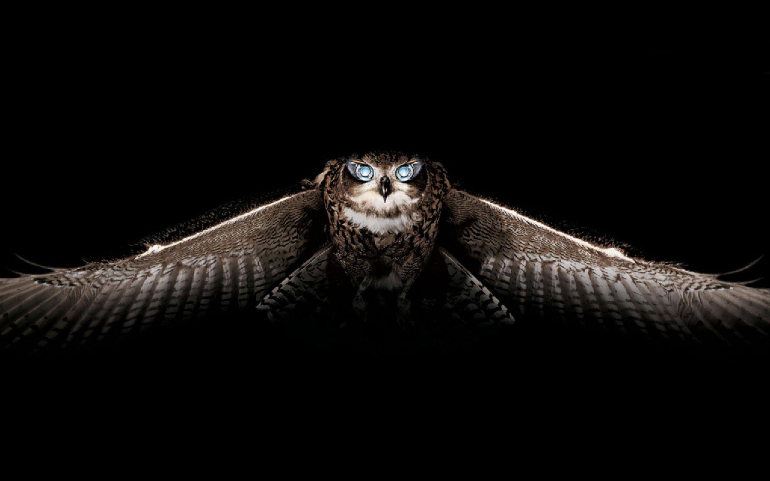 Dark Background Owl Images