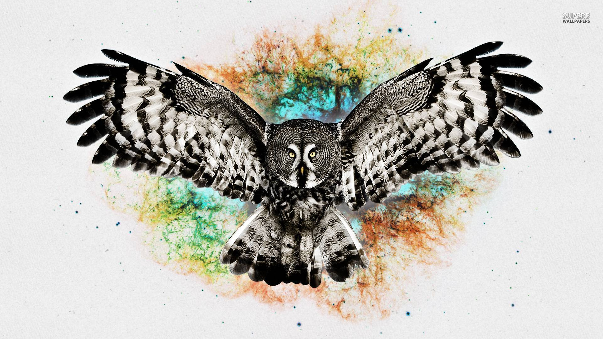 Flying Owl Backgrounds