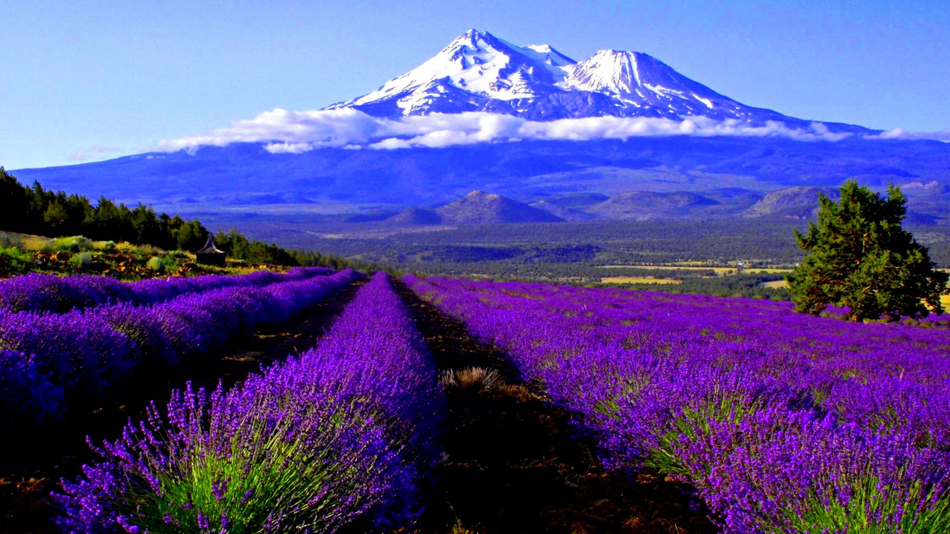 Lavender Cover Mountain Backgrounds