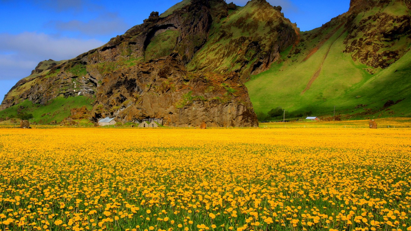 Vast Field of Yellow Flowers
