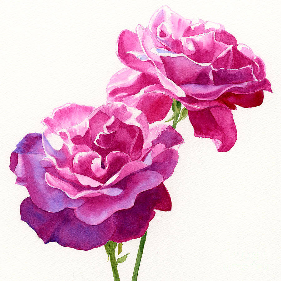 Amazing Violet Rose Painting