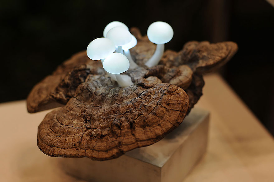 Led Mushroom Light Model