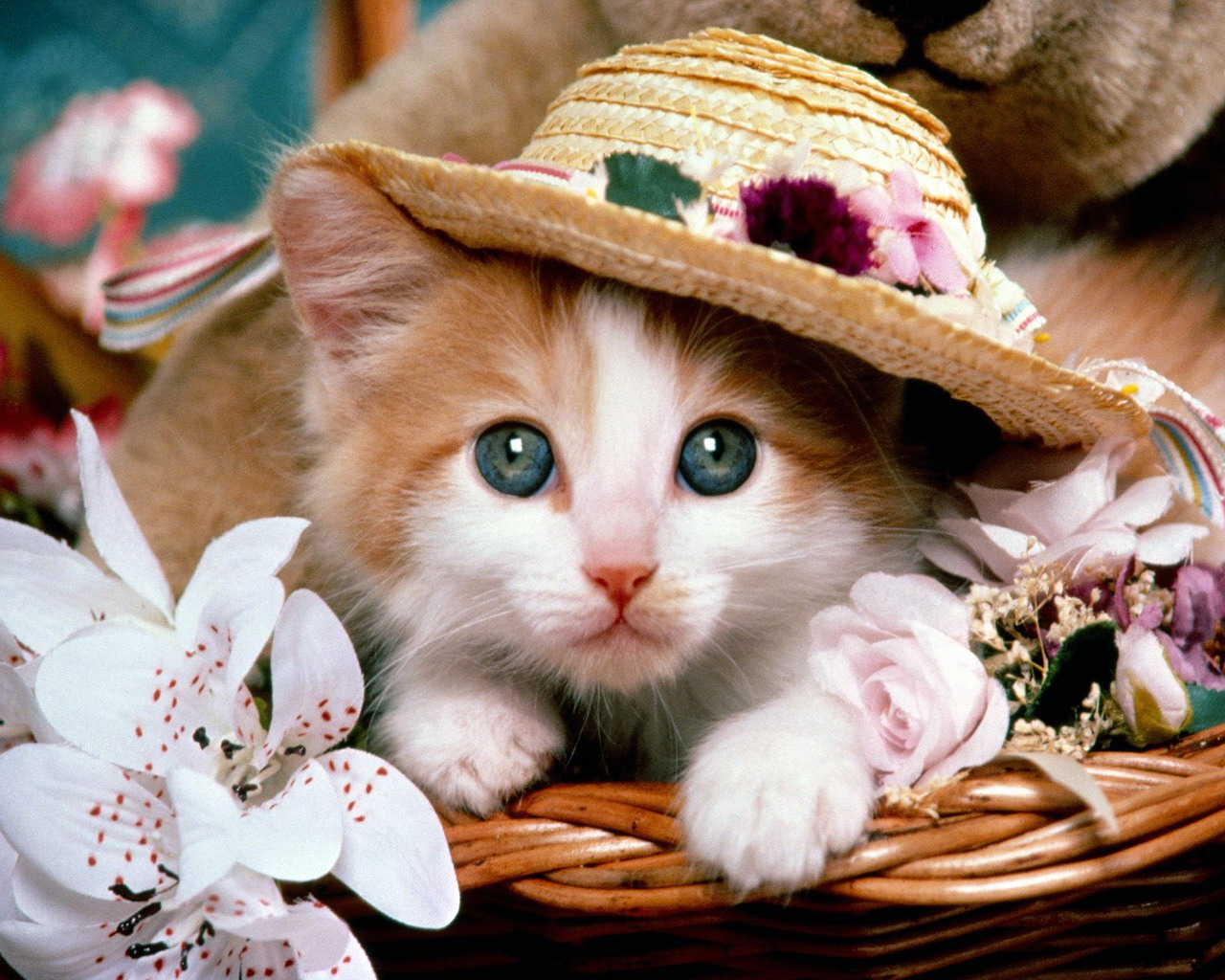 Cute Cat with Hat Wallpaper Animal