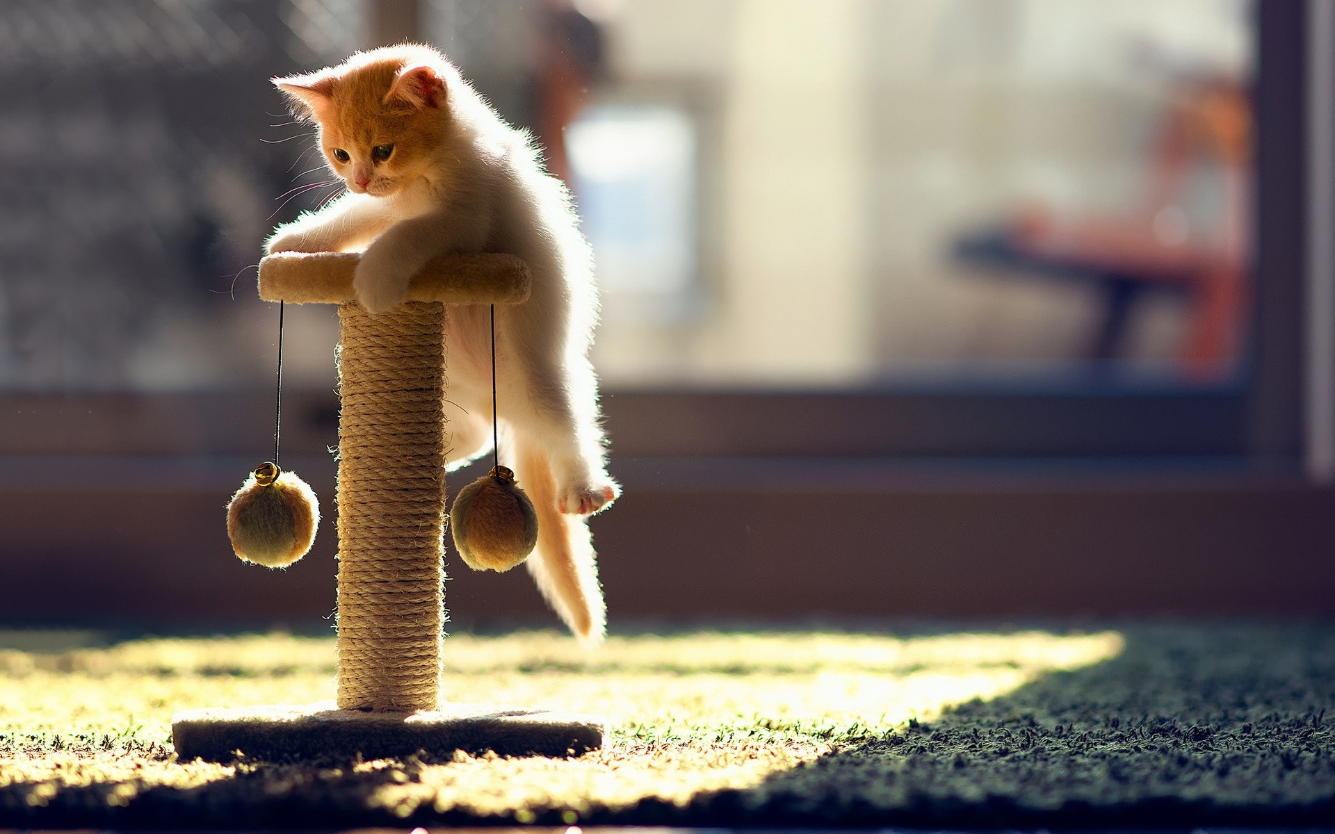 Playful Cat Animal Wallpaper HD for Mobile