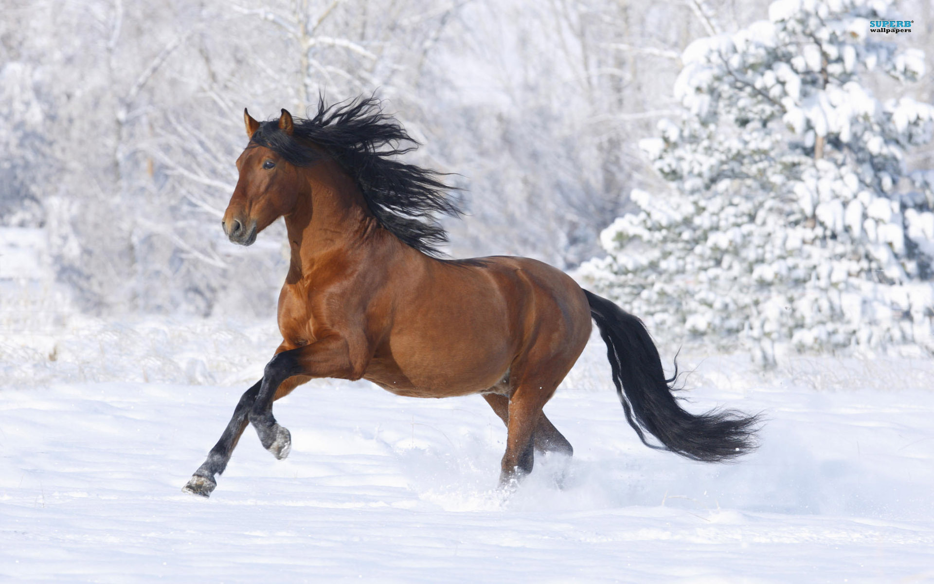 Horse Animal Desktop Wallpaper with Snow Background