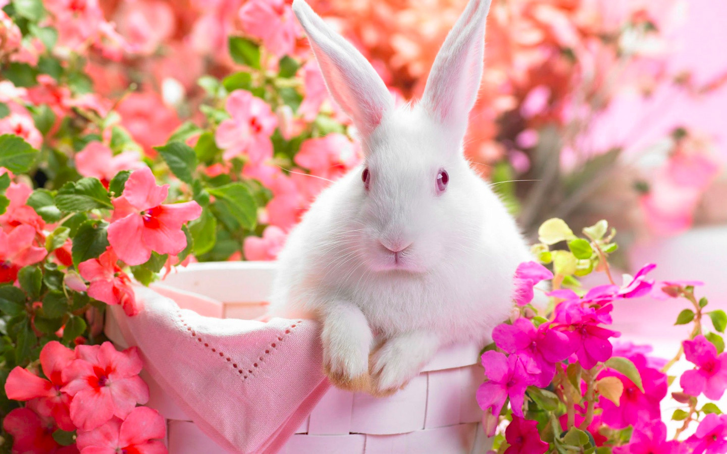 Springtime Hare Cute Animal Background