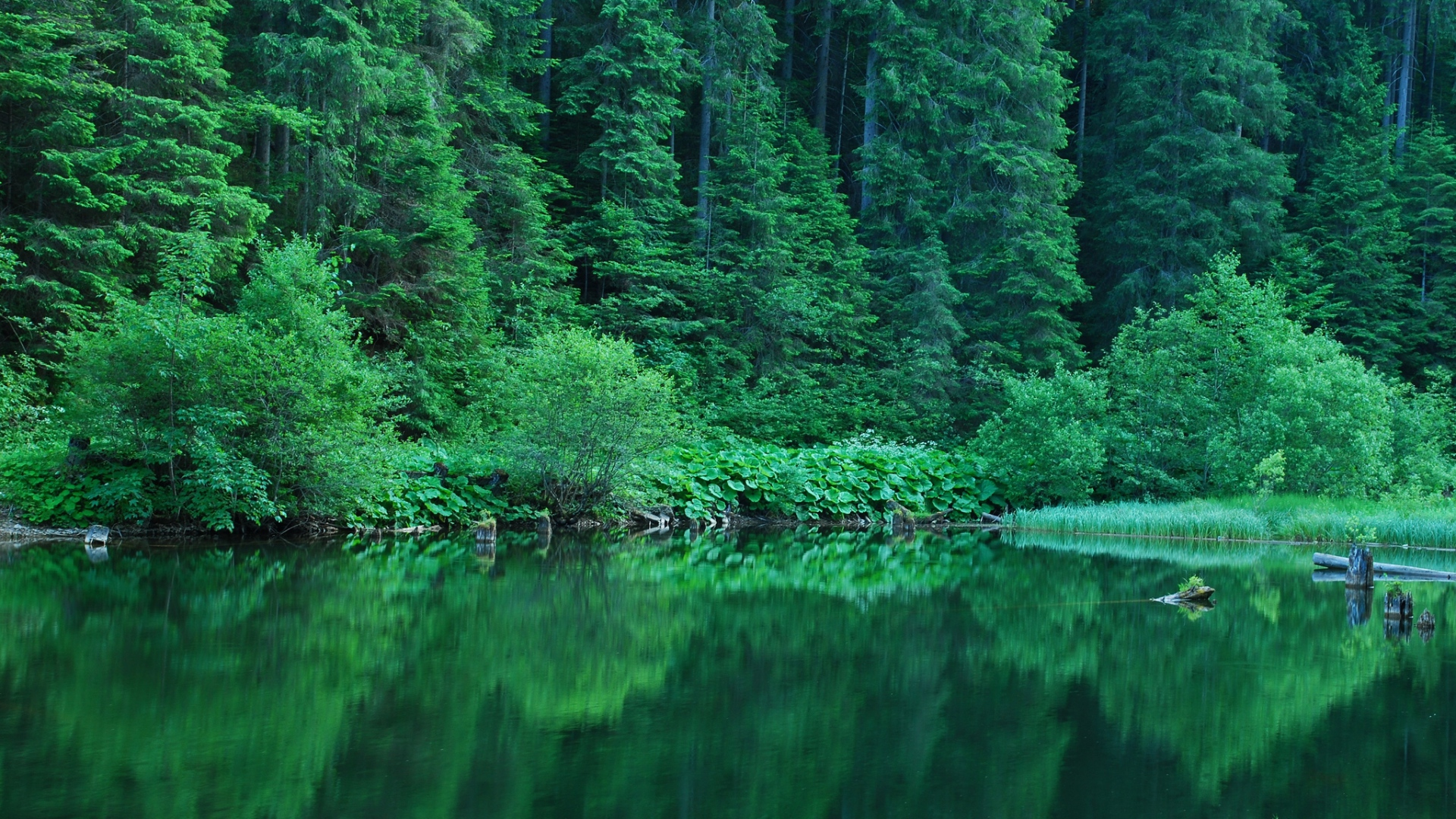 Green Nature HD Background