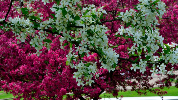 Pink and White Spring Flowets Wallpaper