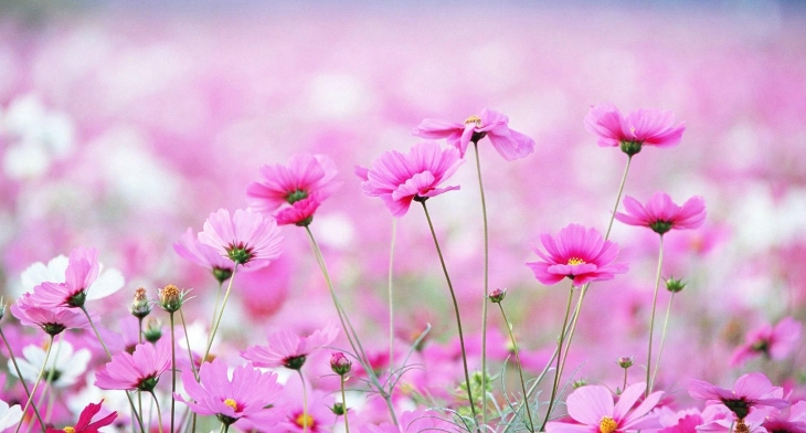 Beautiful Spring Flower Wallpapers