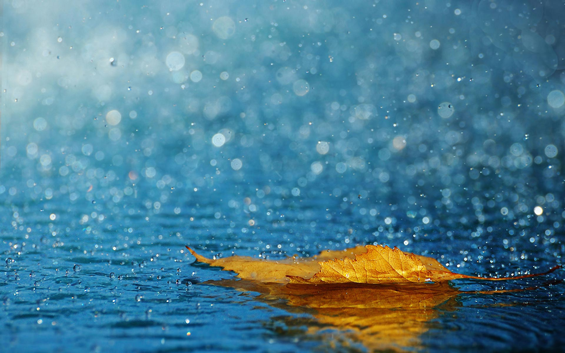 rain desktop wallpaper