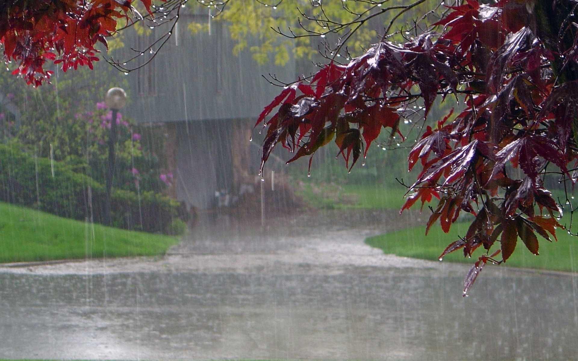 falling rain with leafs background