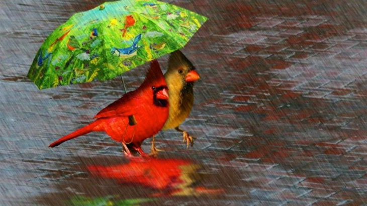pretty birds rain wallpaper