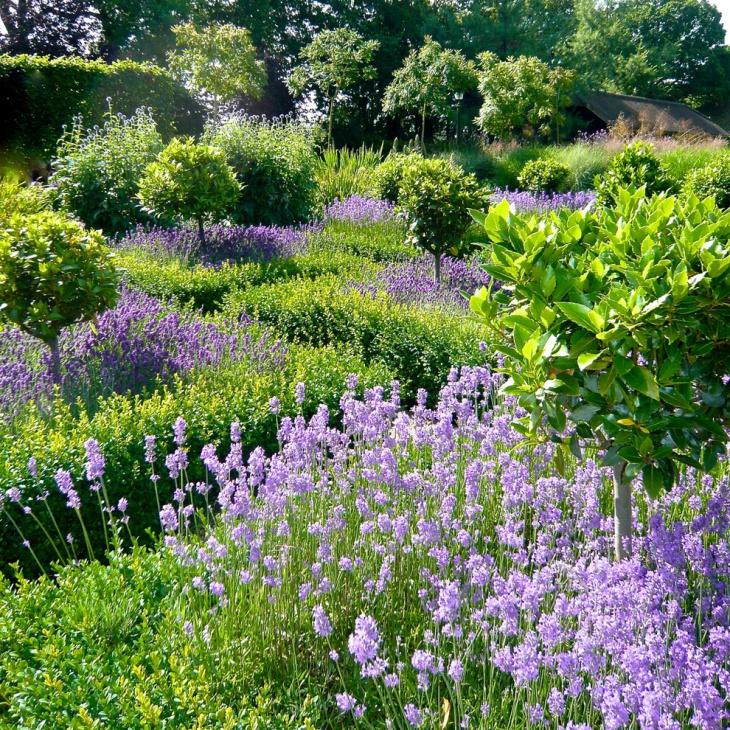 colorful summer garden idea