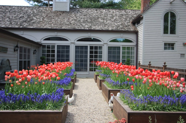 garden with tulips in planting beds
