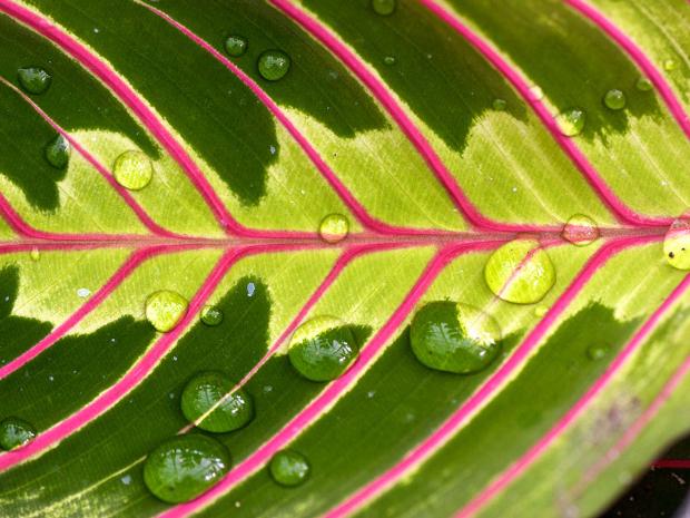 Wet Tropical Leaf Natural Texture