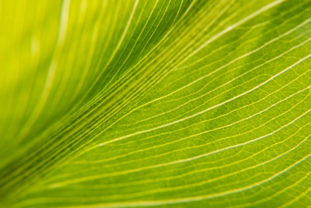 green square leaf texture
