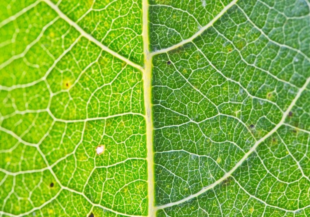 different shade of green leaf texture